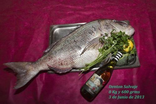 denton-salvaje-86-kg