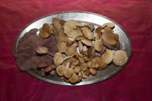 setas-silvestres-20121107