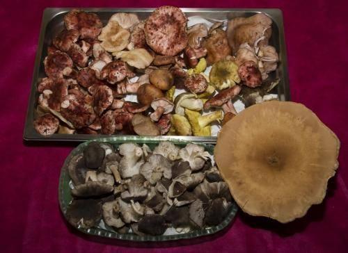 setas-silvestres-20121120